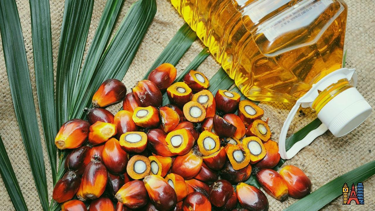 Pourquoi l'huile de palme est un désastre pour l'environnement ?