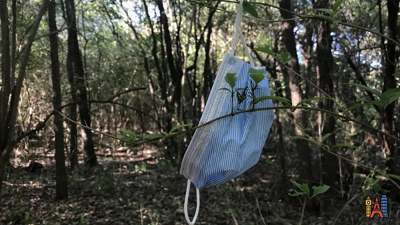 Virus et forêt vierge, découvrez pourquoi il est essentiel de prendre soin de nos forêts.